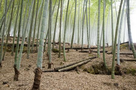 Bamboo forestSave een lichttafel Vind vergelijkbare beelden ShareStock Foto: Het bos van het bamboe Vind vergelijkbare beelden ShareStock Foto: Het bos van het bamboe