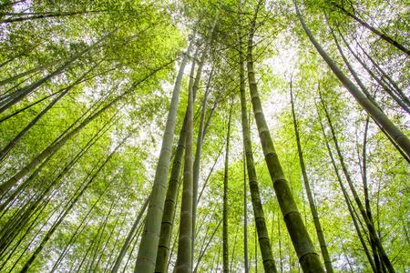 Foret de bambou Banque d'images - 69973691