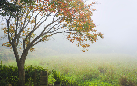 Een herfst boom onder zeer zware sluier van mist. Stockfoto