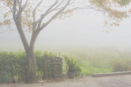 An autumn tree under very heavy veil of fog. Stock Photo