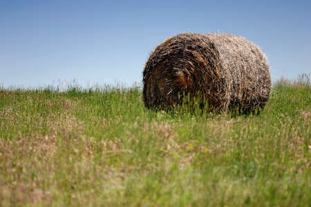 ag: bale of hay on a field, blue sky Stock Photo