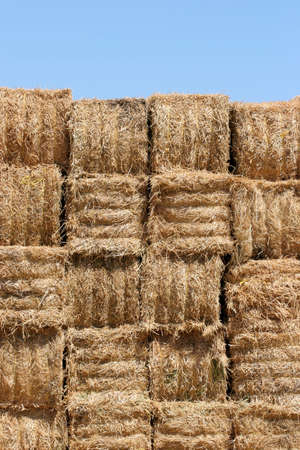 dry cow: hay bales wall against a blue sky