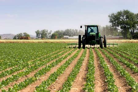 traktor: Landwirt auf seinem Traktor Pfl�gen Bereich, l�ndlichen Wyoming