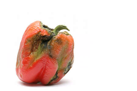 a not so fresh bell pepper - took a couple of weeks to get this shot, lol... isolated macro over white photo