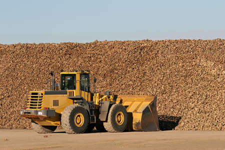 tons: sugar beet being moved by bulldozer to a nearby processing plant
