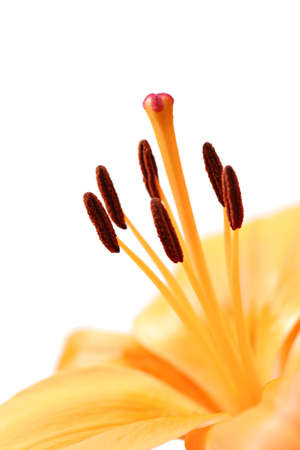 anthers: orange lily macro with shallow depth of field - focus on tip of stamen Stock Photo