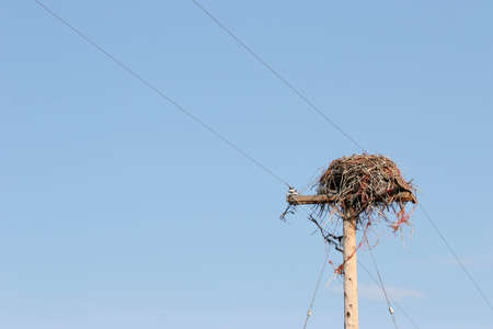 large bird: large bird nest on utility pole