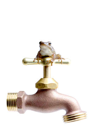 green tree frog: water conservation - save water. tiny green tree frog perched on top of a standard outdoor faucet. isolated on white.