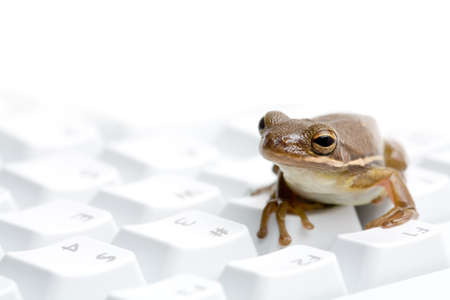 highkey: frog on keyboard - green tree frog macro on highkey keyboard. macro with limited depth of field, focus on eye.