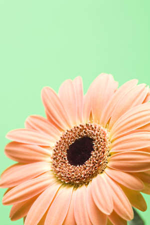 daisy macro isolated over green with copyspace, shallow depth of field Stock Photo - 643726