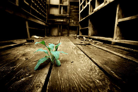 hope - young plant emerges through the cracks of an old floor in an abandoned industrial warehouse. slight grain added on background, limited dof. photo