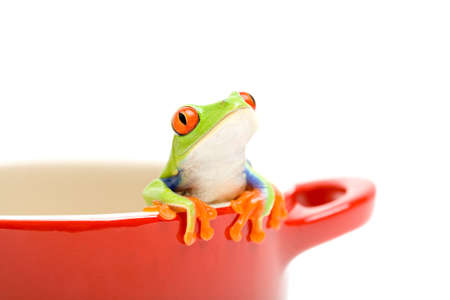 green tree frog: frog looking out of cooking pot for help. a red-eyed tree frog (Agalychnis callidryas), closeup isolated on white