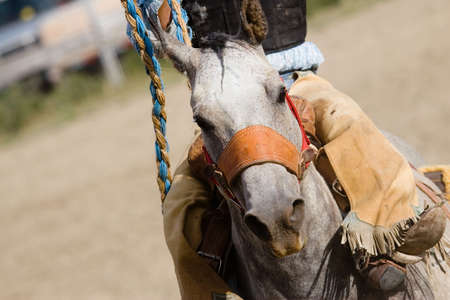 horse closeup with cowgirl in chaps at rodeo barrel racing event, with grain