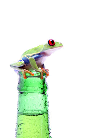 agalychnis: frog on a bottle - red-eyed tree frog (Agalychnis callidryas) on a wet bottle isolated on white Stock Photo