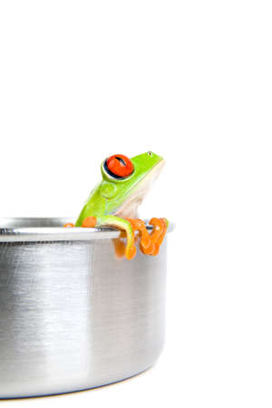 agalychnis: frog in a cooking pot - a red-eyed tree frog (Agalychnis callidryas) closeup isolated on white Stock Photo