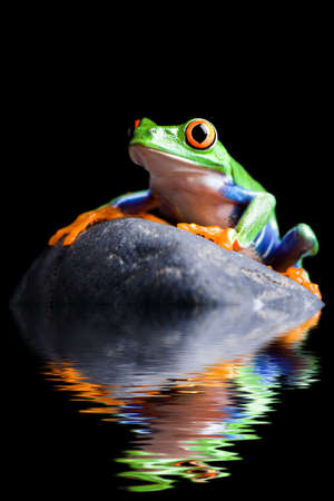 frog on a rock closeup isolated on black Stock Photo