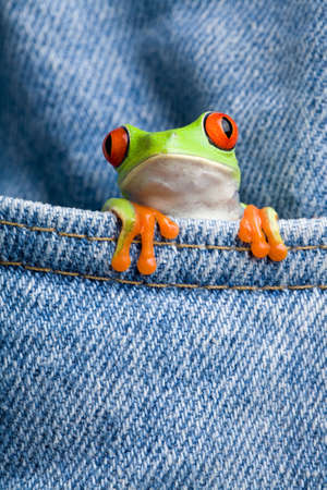 peep toe: frog looking out of jeans pocket closeup