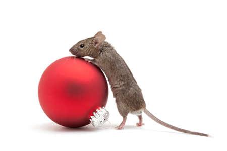 myszy: Mysz patrząc nad czerwonym bauble Christmas - samodzielnie na biały