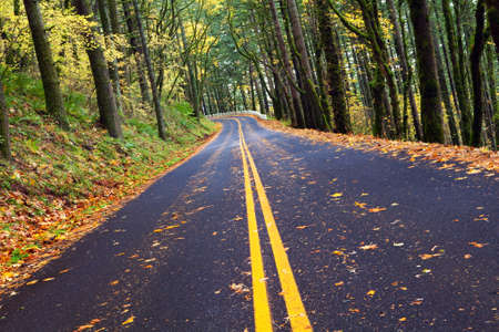 fall winding forest mountain road - autumn in Northwest photo