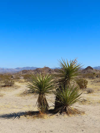 Scenic views of Joshua Tree National Park in southern California.