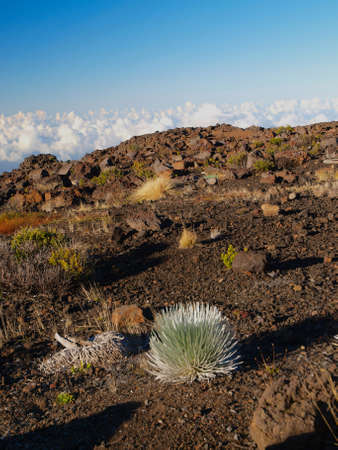 Scenic views of Haleakala National Park on the island of Maui in the state of Hawaii.