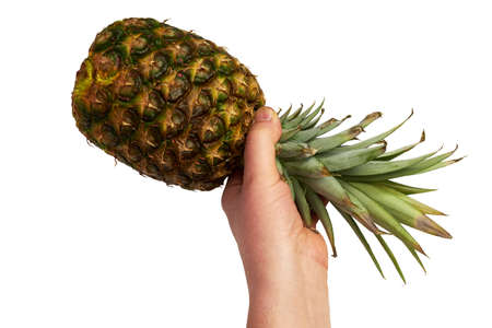 hands holding a pineapple isolated on white background