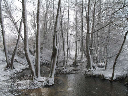 snow in the forest in early Spring