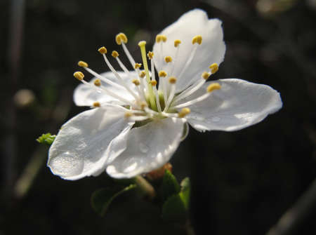 white flower on the dark background
