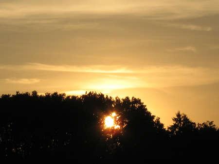 sun breaking through the trees photo