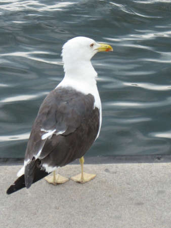 moll: a seagull sitting on the moll Stock Photo