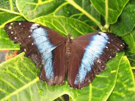 a butterfly expanding the wings photo