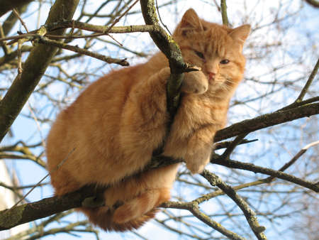 Cat on the tree photo