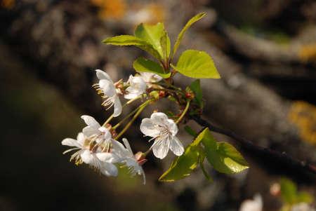 flowered photo