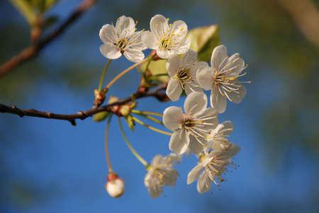flowers Stock Photo - 3128013