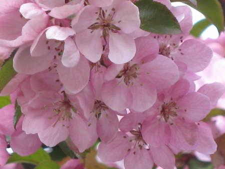 flowered: flowered tree