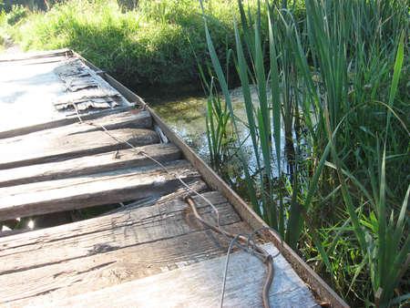 morass: bridge Stock Photo