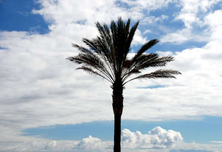 warm climate: warm climate flora: lonely palm with cloudy sky in the background Stock Photo