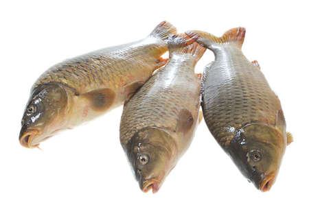 Three fresh carp in a perspective a head to the tail on a white background Stock fotó