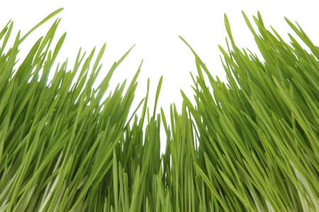 Enormous stems of green grass. View from a bottom upwards Stock Photo