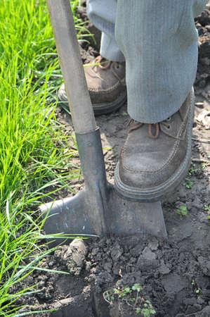 shovel in dirt: Gardener digging up land. Close-up shovel in the ground and legs gardener