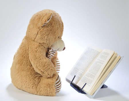 Image of a stuffed bear reading a book