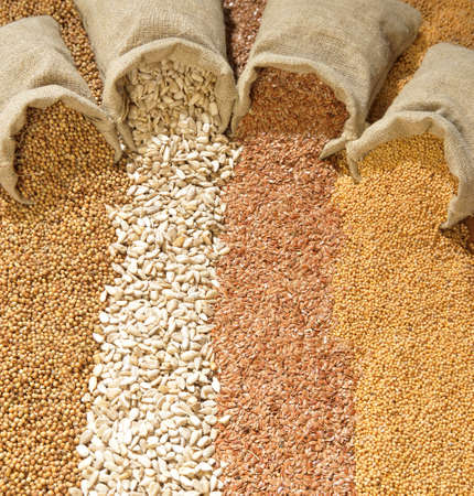 seeds of coriander, sunflower, flax and mustard are spilled from linen sacs