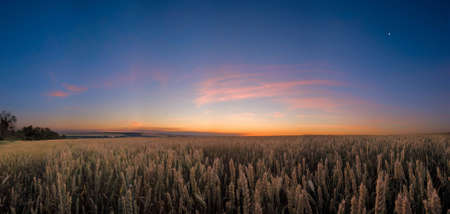 In the wheat field at the night