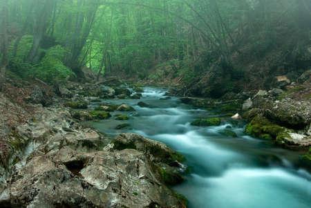 strumień: Wiosny w lesie