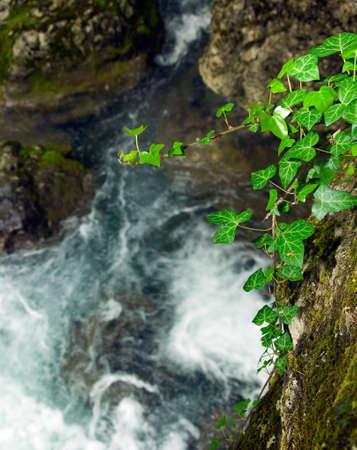 liana: Liana hanging over the river Stock Photo