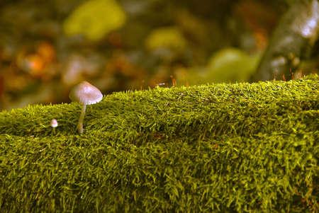 fungous: Fungus family