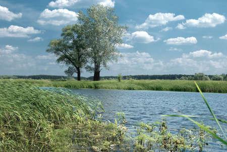 poplars: Poplars on the pond