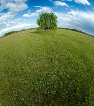 Lonely tree with a curved horizon Stock Photo - 5838774