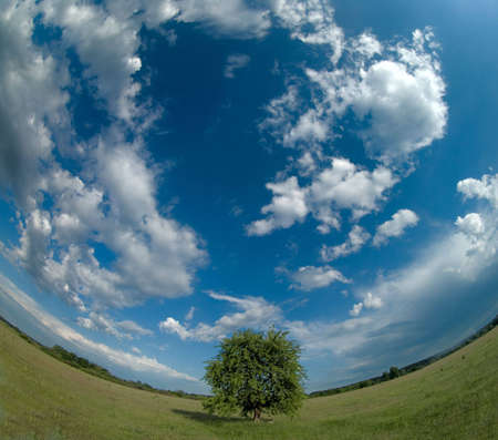 Lonely tree with a curved horizon Stock Photo - 5838812