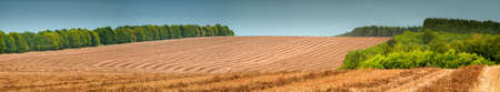 Vivid buckwheat field with cloudy sky Stock Photo - 5838721
